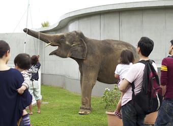象のイベント